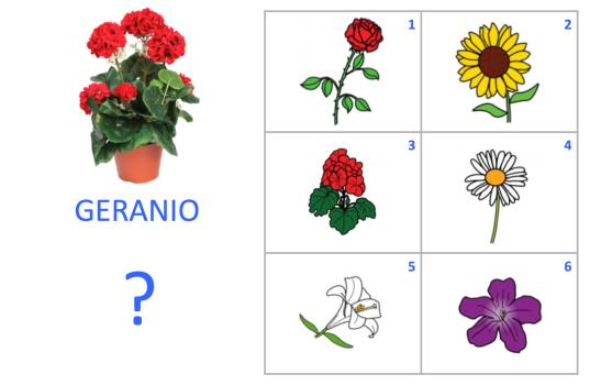 VOC-Flores-Ej1