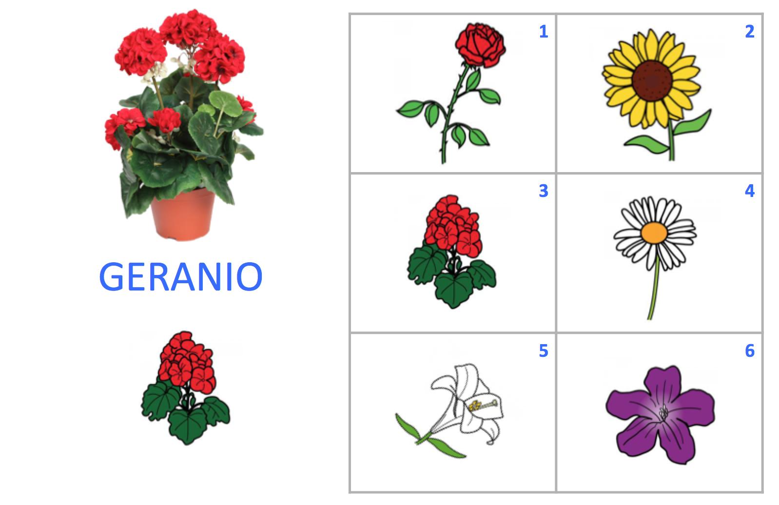 Vocabulario flores un mar de palabras - Clase de flores y sus nombres ...