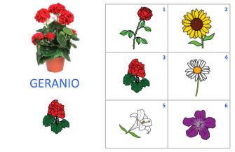VOC-Flores-Ej2