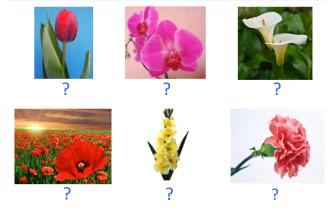 VOC-Flores-Ej5
