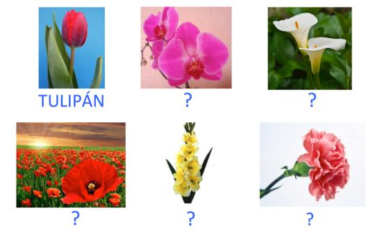 VOC-Flores-Ej6