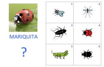 VOC-insectos-Ej1
