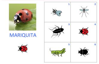 VOC-insectos-Ej2