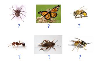 VOC-insectos-Ej5