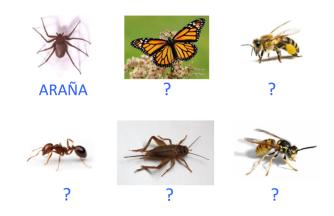 VOC-insectos-Ej6